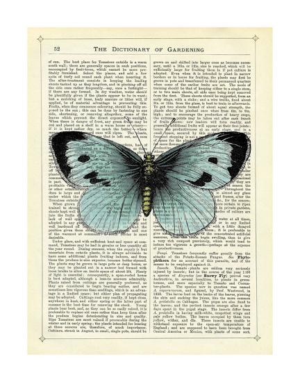 Blue Butterfly-Marion Mcconaghie-Art Print