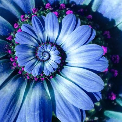 https://imgc.artprintimages.com/img/print/blue-camomile-daisy-flower-spiral-abstract-fractal-effect-pattern-background-blue-violet-navy-flow_u-l-q1drz6h0.jpg?p=0