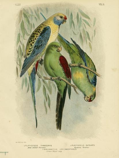 Blue-Cheeked Parakeet, 1891-Gracius Broinowski-Giclee Print