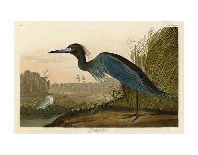 Blue Crane or Heron-John James Audubon-Art Print