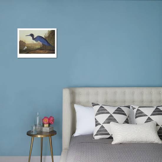 Loons And Turtles And Cranes Oh My >> Blue Crane Or Heron Art Print By John James Audubon Art Com