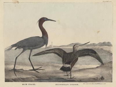 Blue Crane-Mannevillette Elihu Dearing Brown-Giclee Print