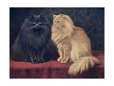 Blue, Cream Persian Cats-W^ Luker-Giclee Print
