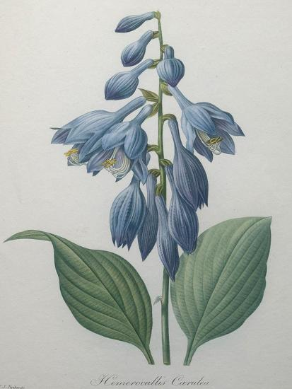 Blue Day Lillies-Pierre-Joseph Redoute-Art Print