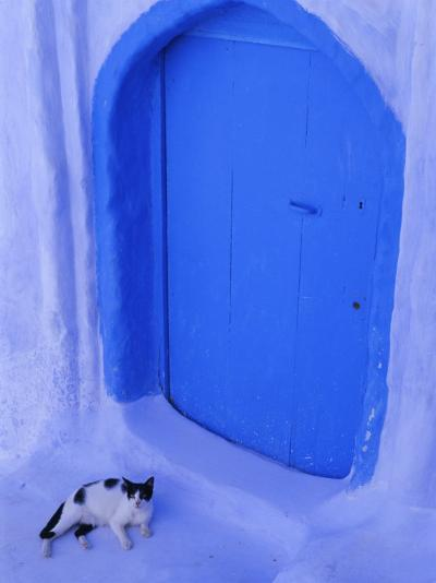Blue Door and Cat, Chefchaouen (Chaouen) (Chechaouen), Rif Region, Morocco, North Africa, Africa-Bruno Morandi-Photographic Print