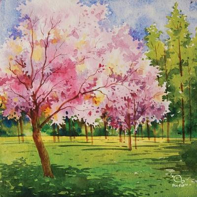 Cherry Blooms I