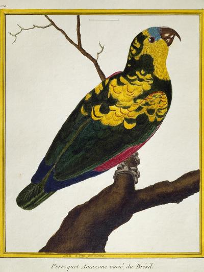 Blue-Fronted Parrot (Amazona Aestiva)--Giclee Print