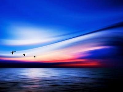 Blue Geese-Josh Adamski-Photographic Print