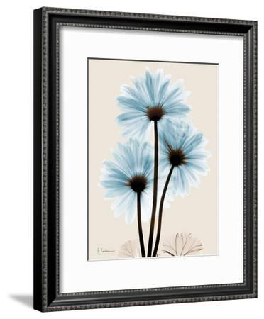 Blue Gerbera Triple-Albert Koetsier-Framed Art Print
