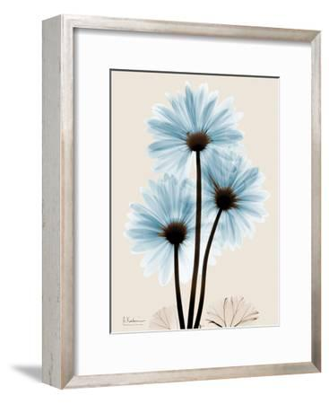 Blue Gerbera Triple-Albert Koetsier-Framed Art Print