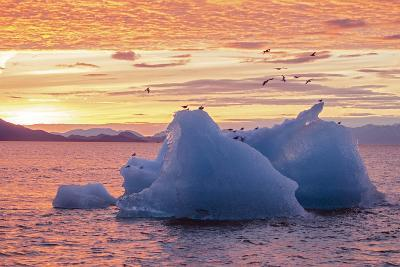 Blue Glacial Ice Floating at Sunset with Gulls-Rich Reid-Photographic Print