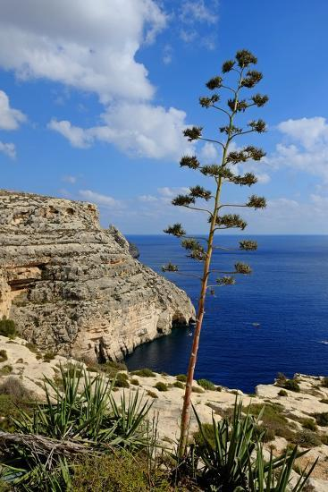 Blue Grotto Coast Malta-Diana Mower-Photographic Print