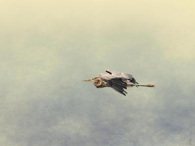 Blue Heron in Flight 2-Jai Johnson-Giclee Print