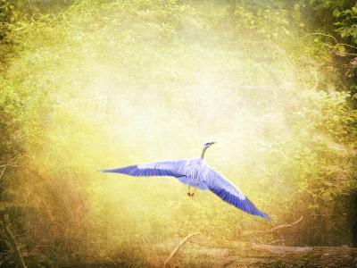 Blue Heron in the Light-Jai Johnson-Giclee Print
