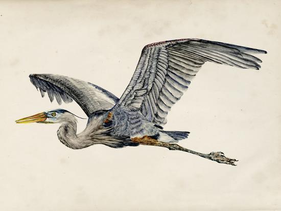 Blue Heron Rendering III-Melissa Wang-Art Print
