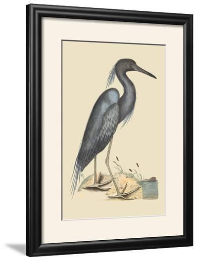 Blue Heron-Mark Catesby-Framed Photographic Print