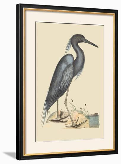 Blue Heron-Mark Catesby-Framed Photographic Print