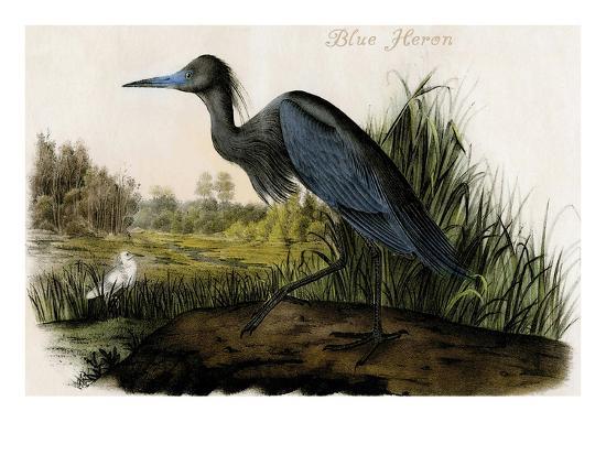 Blue Heron-John James Audubon-Art Print