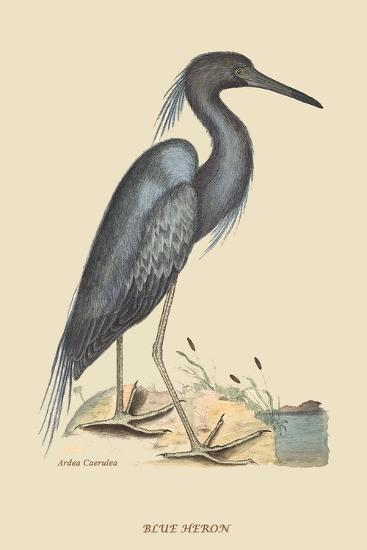 Blue Heron-Mark Catesby-Art Print