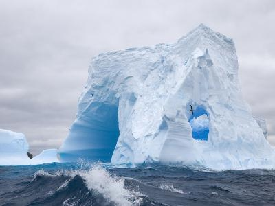 Blue Iceberg Sculpted by Waves and Southern Giant Petrel in Flight-John Eastcott & Yva Momatiuk-Photographic Print