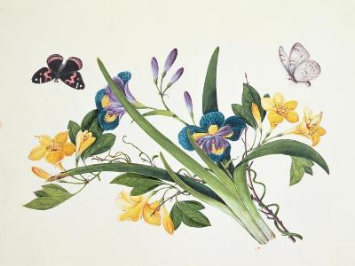 Blue Iris and Insects--Giclee Print