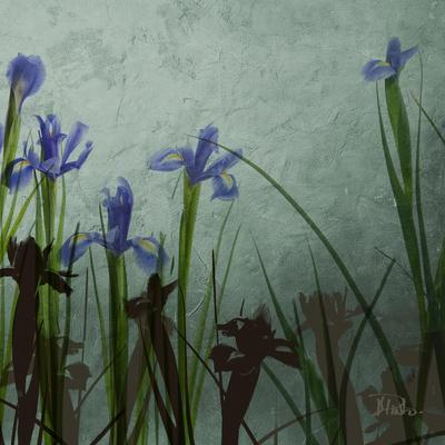 https://imgc.artprintimages.com/img/print/blue-irises-ii_u-l-pxkfxe0.jpg?p=0