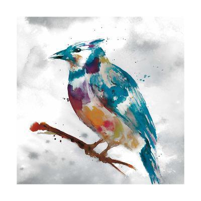 Blue Jay-Stephane Fontaine-Giclee Print