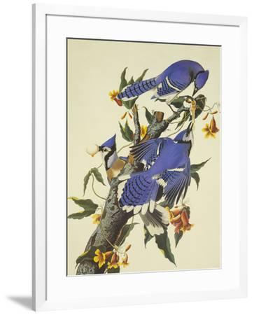 Blue Jay-John James Audubon-Framed Premium Giclee Print