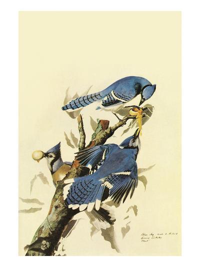 Blue Jay-John James Audubon-Art Print