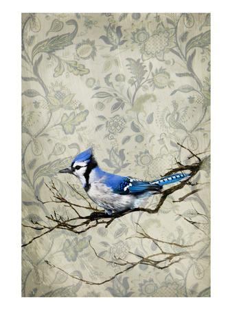 https://imgc.artprintimages.com/img/print/blue-jay_u-l-piggfz0.jpg?p=0