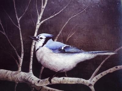 Blue Jay-Kevin Dodds-Giclee Print