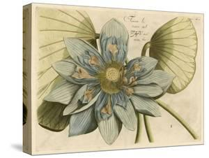 Blue Lotus Flower I