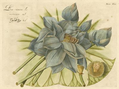 Blue Lotus Flower II--Art Print
