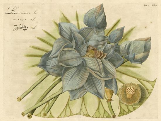 Blue Lotus Flower II--Art Print