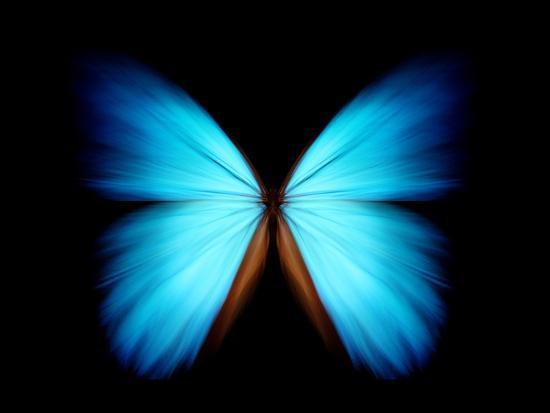 BLUE MORPHO- ethylalkohol-Photographic Print