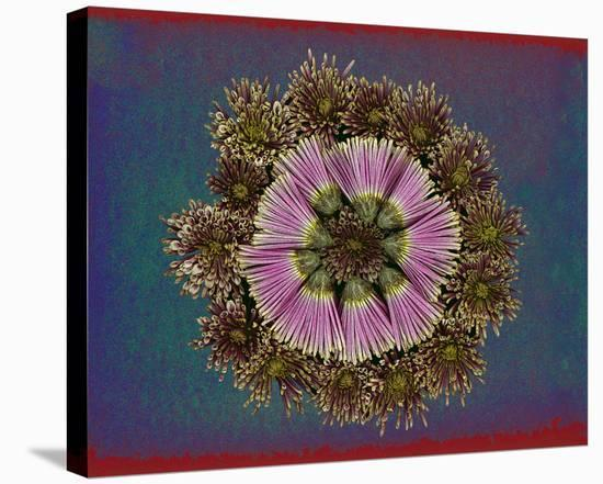 Blue pink red Chrysantheum Mandala--Stretched Canvas Print