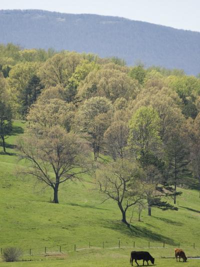 Blue Ridge Farm, Virginia Historic Landmark, Virginia, United States of America, North America-Snell Michael-Photographic Print