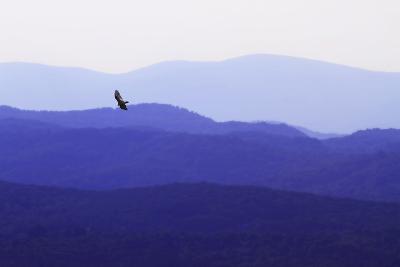 Blue Ridge II-Alan Hausenflock-Photographic Print