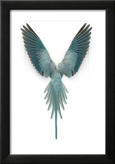 Blue Ringneck Parrot-Christopher Marley-Framed Photographic Print