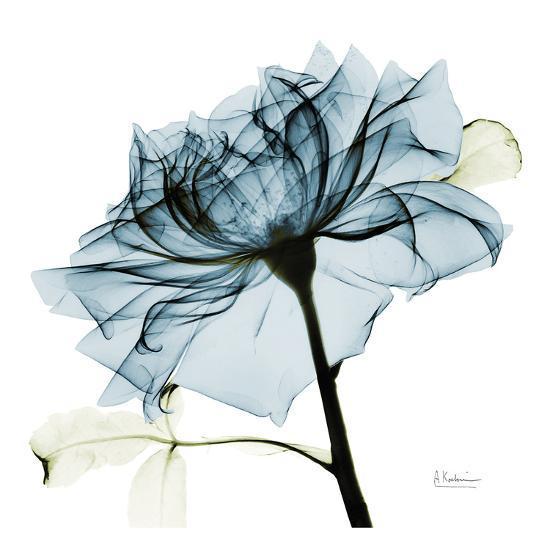 Blue Rose 2-Albert Koetsier-Art Print