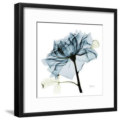 Blue Rose 2-Albert Koetsier-Framed Art Print