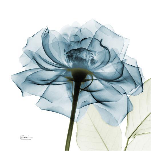 Blue Rose-Albert Koetsier-Art Print