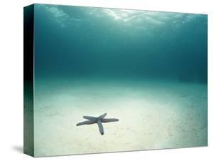 Blue Sea Star in Open Ocean