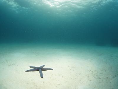 Blue Sea Star in Open Ocean--Photographic Print
