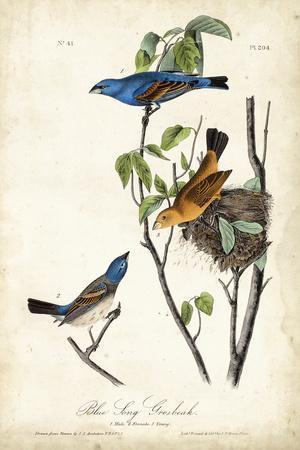 https://imgc.artprintimages.com/img/print/blue-song-grosbeak_u-l-q1bfoa50.jpg?p=0