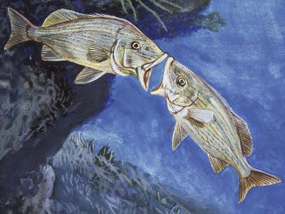 Blue-Striped Grunt (Haemulon Sciurus), Haemulidae--Giclee Print