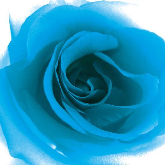Blue Summer Petals-Katja Marzahn-Giclee Print