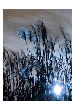 https://imgc.artprintimages.com/img/print/blue-sunset-1_u-l-f93t120.jpg?p=0