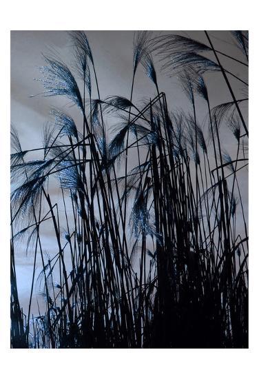 Blue Sunset 2-Sheldon Lewis-Art Print
