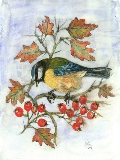 Blue Tit on Hawthorn-Nell Hill-Giclee Print